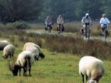 fietsen-drenthe
